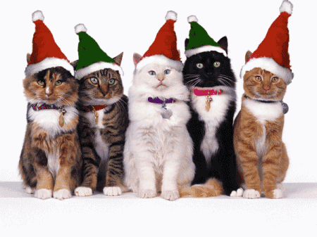 merry_christmas_cats-11421