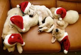 Merry-Xmas-dogs