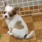 Puppy-heart