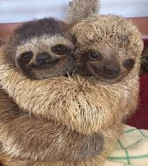 Sloths Hugging