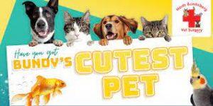 Cutest Pet