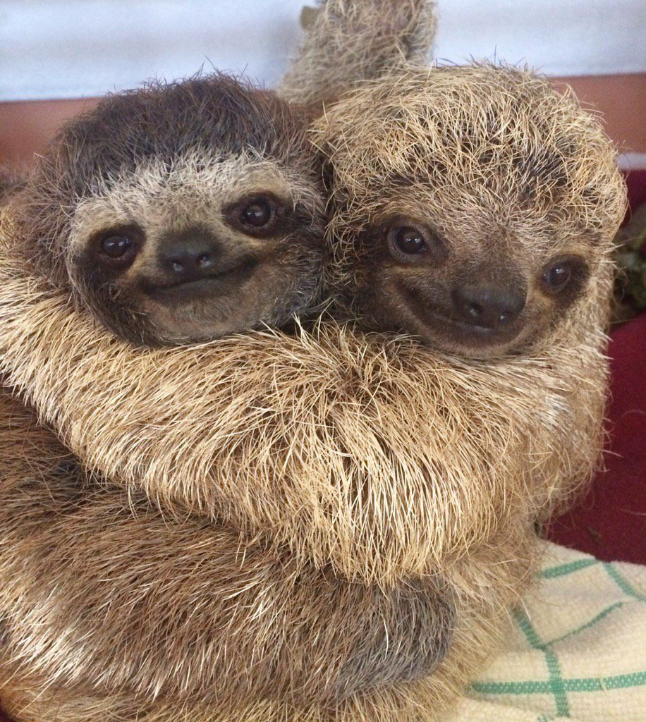 Hugging Sloths