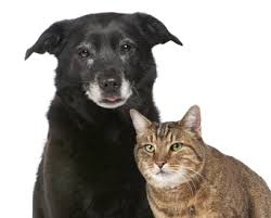 old-cat-and-dog