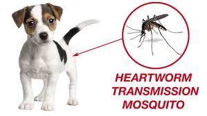 puppy-and-mosquito